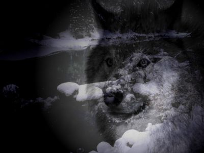 Endoval,el dios-lobo oretano germano